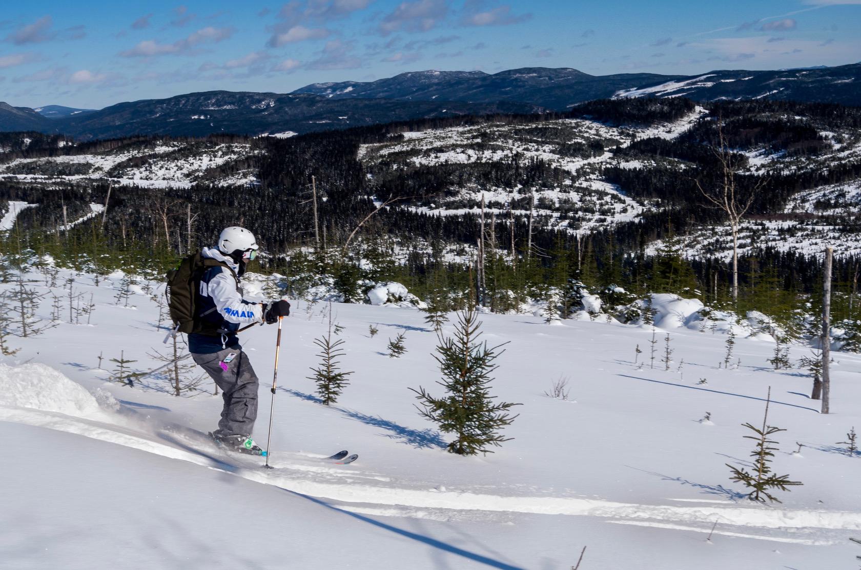 Le ski dans les coupes forestières