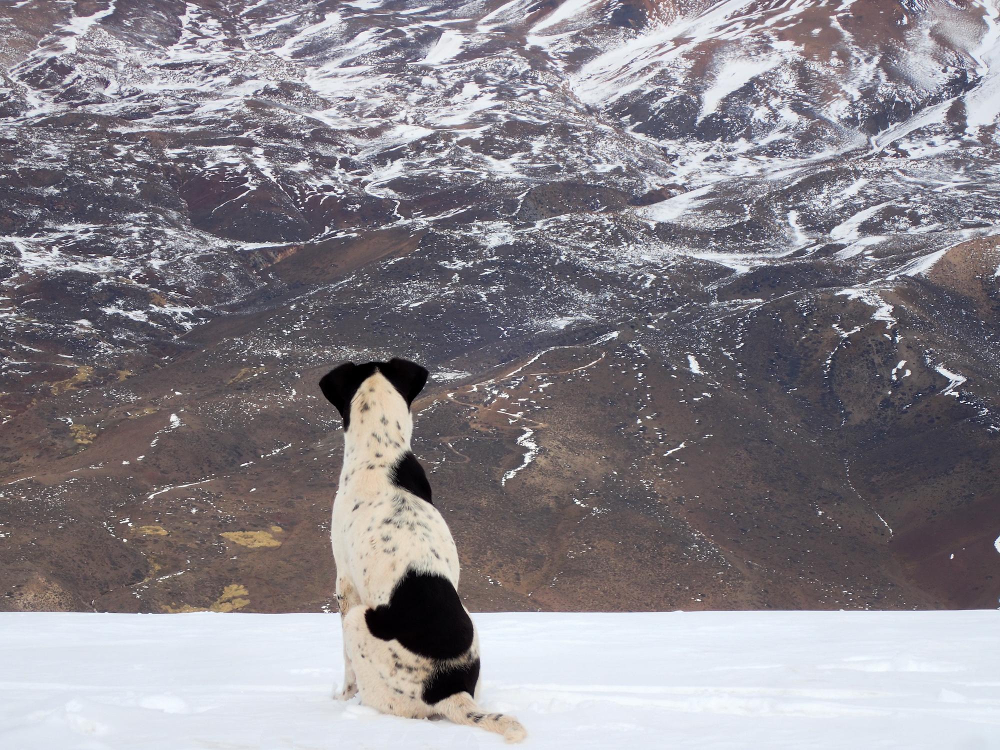 Le chien contemple la vallée du haut de la montagne